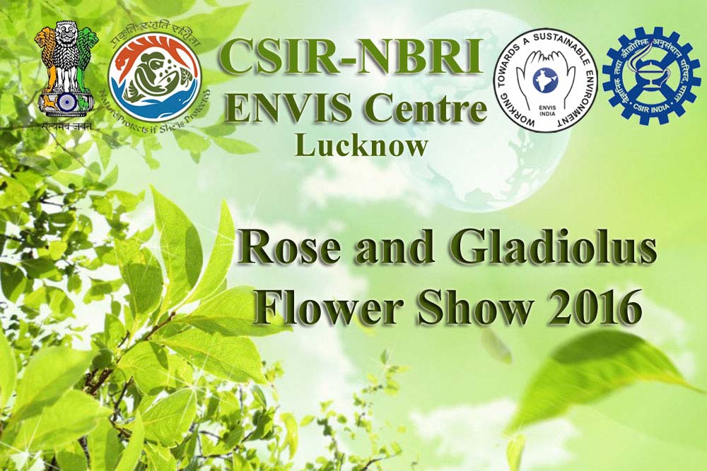 Rose and Gladiolus Flower show 2016